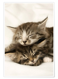 Poster Premium Two cats sleeping