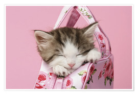 Poster Premium  Sleeping kitten in pink handbag - Greg Cuddiford