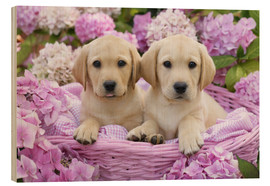 Legno  Labrador puppies in a basket - Greg Cuddiford