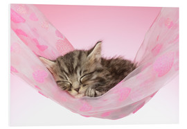 Forex  Sleeping Kitten Hammock - Greg Cuddiford