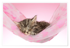 Poster  Sleeping Kitten Hammock - Greg Cuddiford