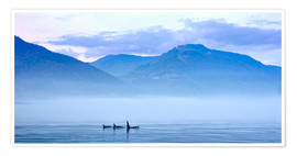 Poster Premium  Three Killer whales in mountain landscape at Vancouver Island - Jürgen Ritterbach