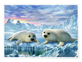 Poster  Seal pups - Adrian Chesterman