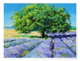 Poster Premium  Tree and Lavenders - Jean-Marc Janiaczyk