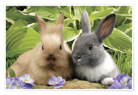 Poster Premium  Brown and grey rabbit - Greg Cuddiford