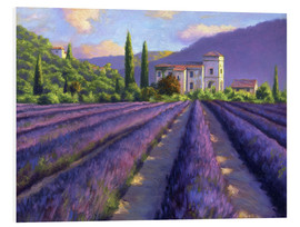 Forex  Lavender field with Abbey - Jay Hurst