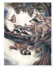 Poster Premium  Raccoons and butterfly - Jody Bergsma