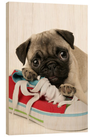Legno  Pug pup and shoe - Greg Cuddiford