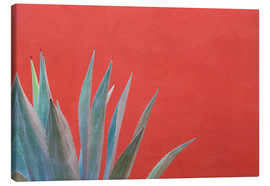 Tela  Agave plant next to colorful wall - Don Paulson
