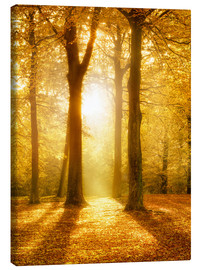 Stampa su tela  Golden autumn forest in sunlight - Jan Christopher Becke