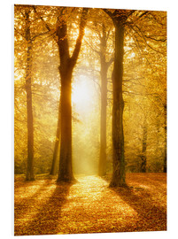 Forex  Golden autumn forest in sunlight - Jan Christopher Becke
