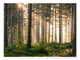 Poster Premium Sunlight in fall forest