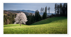 Poster Premium  Blooming Apple Tree in Black Forest - Andreas Wonisch