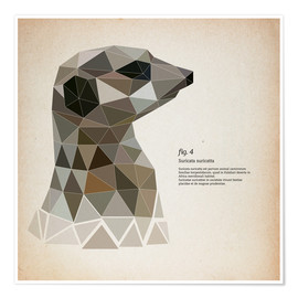 Poster Premium  fig4 Polygon meerkat  square - Labelizer