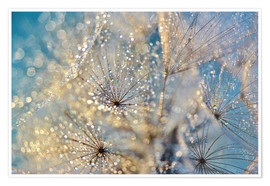 Poster Premium Dandelion Golden Dream