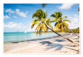 Poster Premium Les Salines beach, Martinique