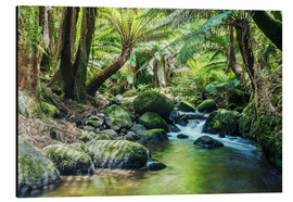 Alluminio Dibond  Rainforest in Tasmania - Matteo Colombo