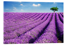 Stampa su vetro acrilico  Lavender field and tree - Matteo Colombo