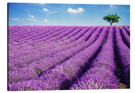 Stampa su alluminio  Lavender field and tree - Matteo Colombo