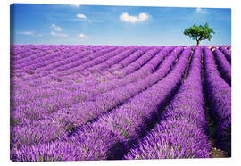 Tela  Lavender field and tree - Matteo Colombo