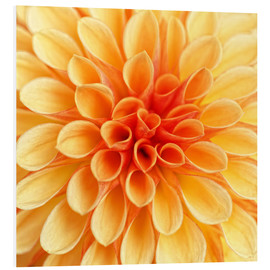Forex  Yellow Dahlia - Martina Cross