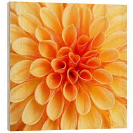 Legno  Yellow Dahlia - Martina Cross