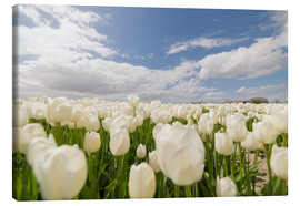 Stampa su tela  White tulip fields - George Pachantouris