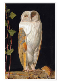 Poster Premium  The White Owl - William James Webbe