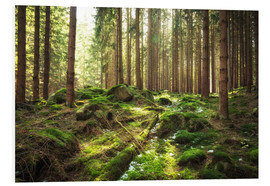 Stampa su PVC  Spring awakening in the forest - Oliver Henze