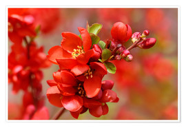 Poster Premium Spring in Red