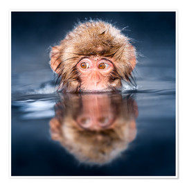 Poster Premium  Japanese Snow monkey bathing - Jan Christopher Becke