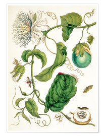 Poster Premium  Passion flower and insects - Maria Sibylla Merian