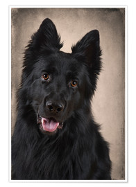 Poster Premium German Shepherd 1