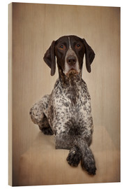 Stampa su legno  German shorthaired pointer / 1 - Heidi Bollich