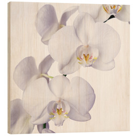 Stampa su legno  Orchid flowers - Johnny Greig
