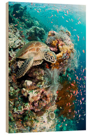Stampa su legno  Green turtle - Matthew Oldfield