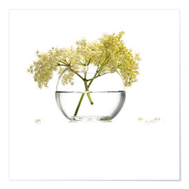 Poster  Elderflower in a glass