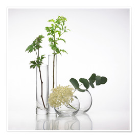 Poster  Plants in glass vases