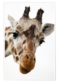 Poster Premium  Giraffe - Power and Syred