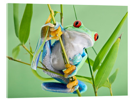 Stampa su vetro acrilico  Red-eyed tree frog - Linda Wright