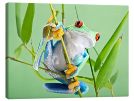 Stampa su tela  Red-eyed tree frog - Linda Wright