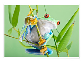 Poster  Red-eyed tree frog - Linda Wright