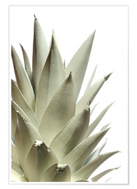 Poster Premium  White pineapple - Neal Grundy