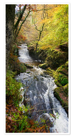 Poster Premium  Lynmouth river woodland - Keith Wheeler