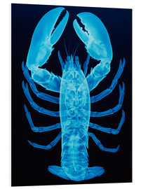 Schiuma dura  X-ray of lobster - D. Roberts