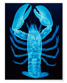 Poster Premium  X-ray of lobster - D. Roberts