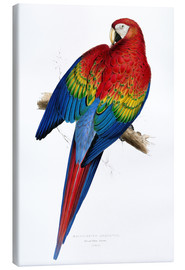 Stampa su tela  Red & Yellow Macaw - Edward Lear