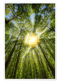 Poster Premium Sunbeams in the forest