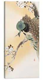 Tela  A peacock in a cherry tree crown - Ohara Koson
