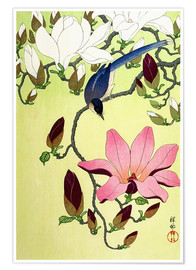 Poster Premium  Magpie with Pink and White Magnolia Blossoms - Ohara Koson